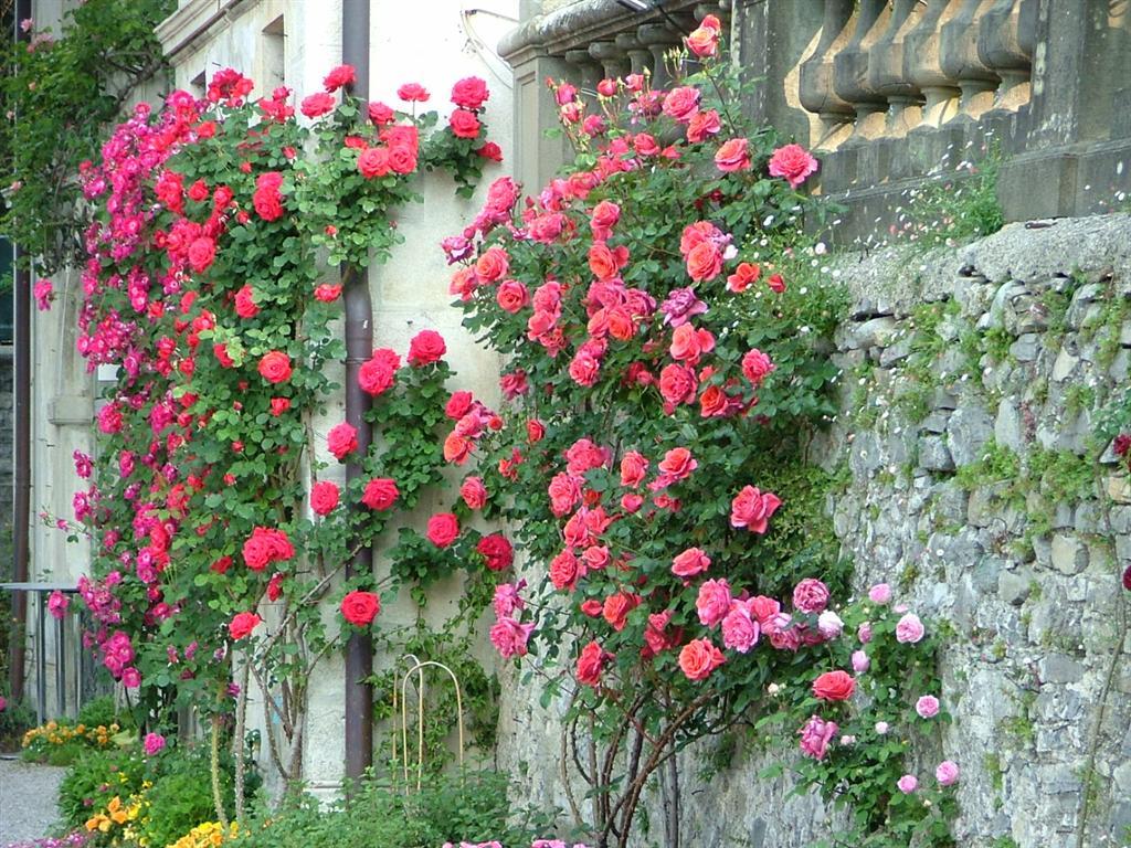 Giardini fioriti immagini good viali piazze e strade del for Giardini immagini