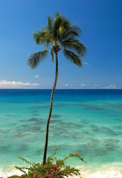 Barbados mare feste e cibo raffinato viaggi tgcom24 for Arredamento raffinato e mkt