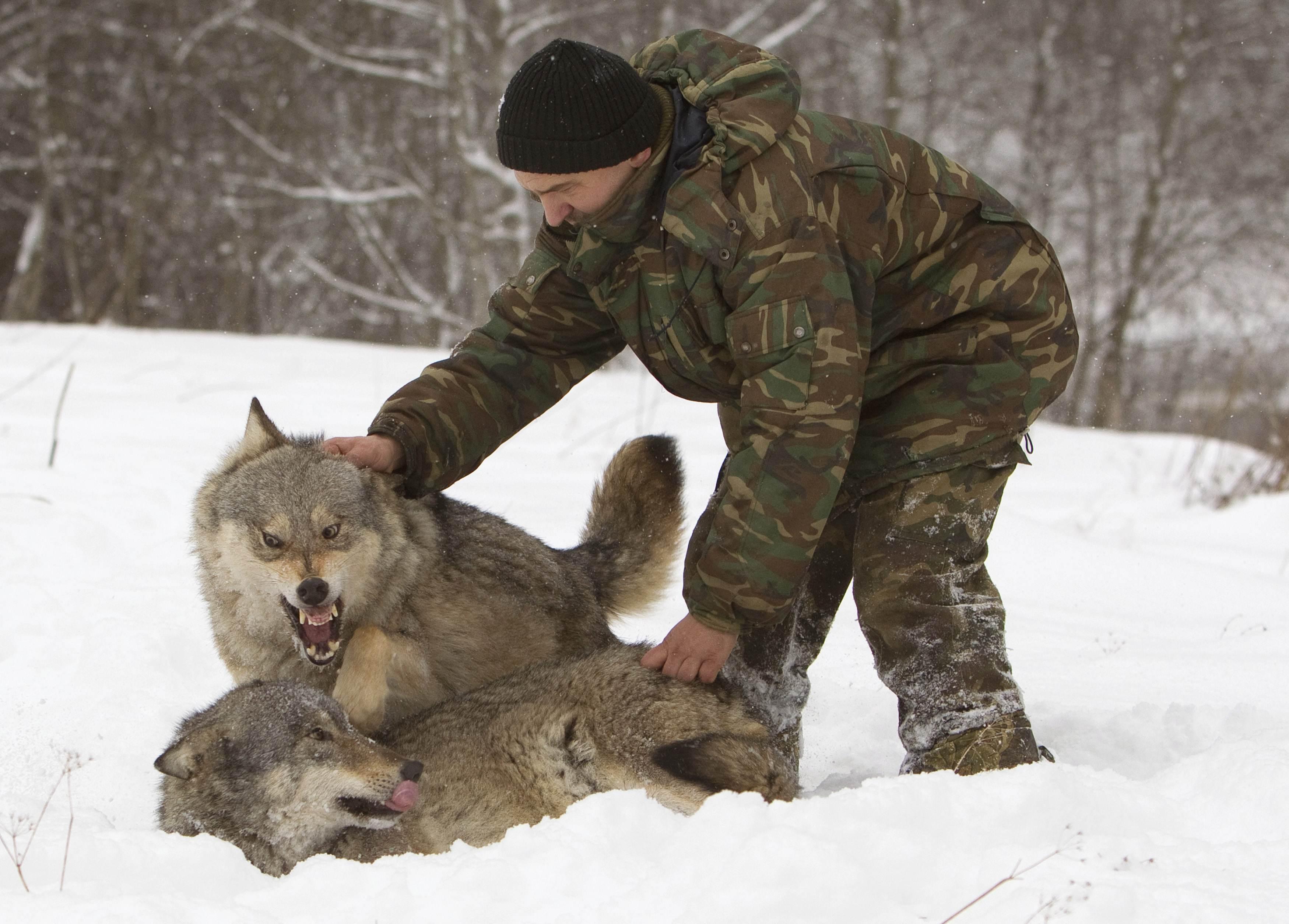 lecologista russo che quotballa coi lupiquot tgcom24 foto 1